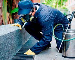 Procesos efectivos para el control de roedores e insectos Barcelona